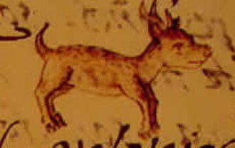 Chihuahua (dog) - A Techichi, likely the ancestor of Chihuahuas