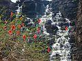 Teerathgarh Falls.jpg