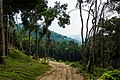 Thailand - Koh Phangan (25012795981).jpg