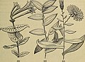 The American botanist and florist; including lessons in the structure, life, and growth of plants; together with a simple analytical flora, descriptive of the native and cultivated plants growing in (14780136534).jpg