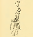 The Osteology of the Reptiles-196 kjh iuyhg fghj.png