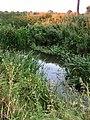 The River Eye near Stapleford Park, Leicestershire - geograph.org.uk - 37047.jpg