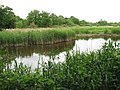 The Ted Ellis Nature Reserve - Old Mill Marsh - geograph.org.uk - 1341577.jpg