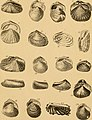The conchologist's text-book - embracing the arrangements of Lamarck and Linnaeus with a glossary of technical terms, to which is added a brief account of the mollusca (1858) (20058412003).jpg