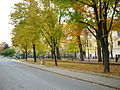The leaves changing color in Levoča, 2006.jpg