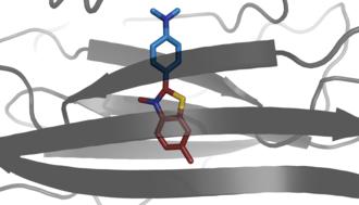 Thioflavin - Image: Thioflavin T bound to amyloid like oligomer