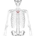 Thoracic vertebra 4 anterior.png