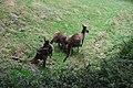 Tierpark Berlin Frühjahr 2013 268.JPG