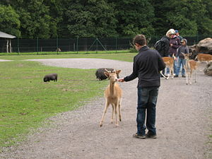 Essehof Zoo - Visitors feeding the animals