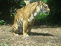 Tigre espacial.JPG
