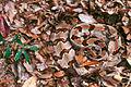 Timber Rattlesnake.jpg