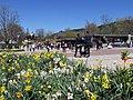 Titisee im Frühling - panoramio.jpg