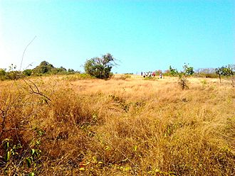 Basavaraj Durga Island - The top of the island is flat and covered with dry grass