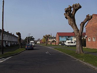 Tree topping - Topped trees in Gosport, England