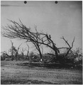 Tornado damage. Udall, Kansas - NARA - 283885.tif
