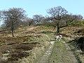 Track in Bance Edge Plantation, Dunford - geograph.org.uk - 1273252.jpg