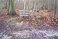 Trail Junction in RSPB Tudeley Wood - geograph.org.uk - 1609242.jpg