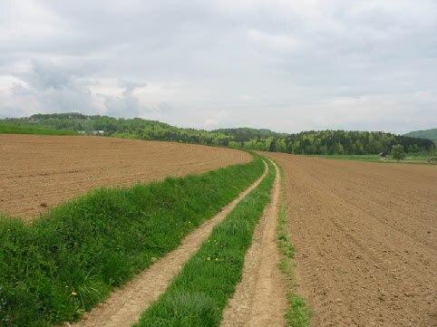 Trail between two fields (Slovenia, Selo pri Mirni)