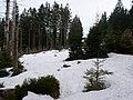 Trail from Sonnenberg to Rehberger Planweg 07.jpg