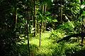 Trail to Aihualama Falls (5171255424).jpg