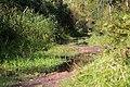 Trail to Yuntolovka River in Olgino.jpg
