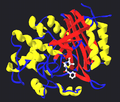 Transpeptidase with bound penicillin.png
