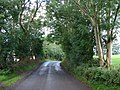 Tree-Lined Road - geograph.org.uk - 932667.jpg
