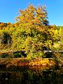 Tree At The Bank - panoramio.jpg