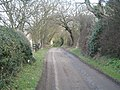 Tree lined road. - geograph.org.uk - 149968.jpg