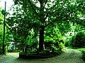 Treethatownsitself.jpg