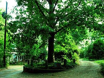 http://upload.wikimedia.org/wikipedia/commons/thumb/b/b0/Treethatownsitself.jpg/350px-Treethatownsitself.jpg