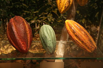 Cocoa bean - Three main varieties of cocoa: Criollo, Trinitario and Forastero