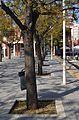 Troncs dels arbres de l'andana de l'estació de Dénia.JPG