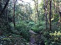 Tryon Creek State Natural Area 2017 05.jpg