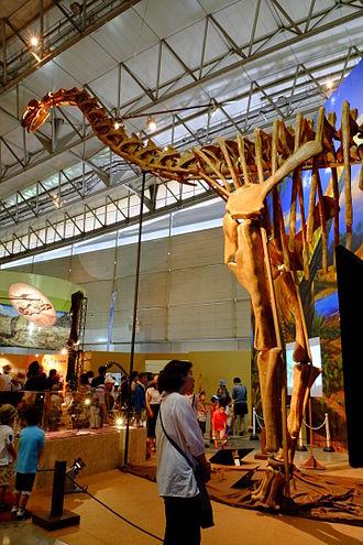 Turiasaurus - Mounted replica skeleton