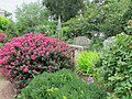 U.S. Botanic Garden in July (14789660382).jpg