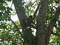 UNESCO Niokolo-Koba National Park Senegal (3686589043).jpg