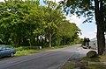 Uetersen Walnußbaumreihe Große Twiete 01.jpg