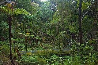 Ulva Island (New Zealand) Island in New Zealand