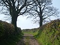 Un-made Road - geograph.org.uk - 358300.jpg