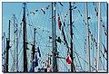 Un mare di fili ...in mare - panoramio.jpg
