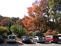 United States National Arboretum 2.JPG