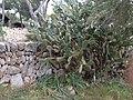 Unknown cactus 2.jpg