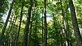 Urbasa-Andia Nature Park in Navarre 03.jpg