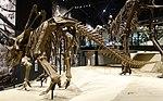 Utahceratops gettyi 5 salt lake city.jpg