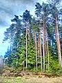 Valdaysky District, Novgorod Oblast, Russia - panoramio (3422).jpg