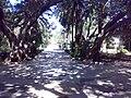 Villa Comunale Ribera 2.jpg