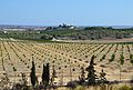 Vista del castell de Montemar d'Algorfa.JPG