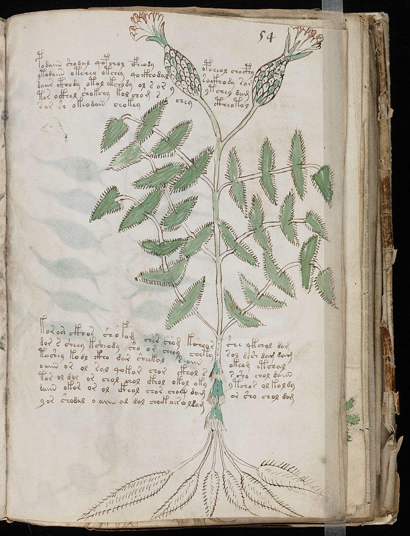Voynich Manuscript (107).jpg