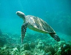 turtles namn